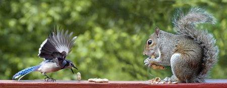 Bird and Squirrel photo