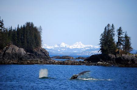 blue whale: Whale Stock Photo