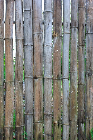 Bamboo Wall Texture Stock Photo - 20669560