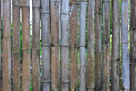 Bamboo Wall Texture photo