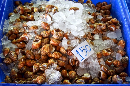 freshwater snails: Freshwater Snail on sale in Thailand open market for food ingredient