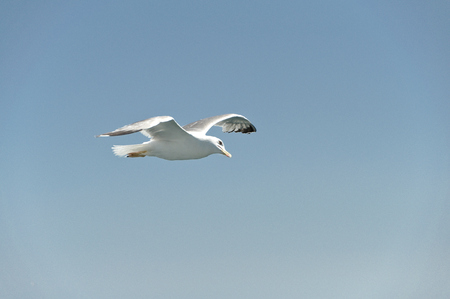 warm blooded: floating Seagull, playing with the Wind