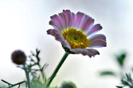floret: Meadow Floret Stock Photo