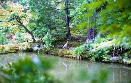 View of crane in a Japanese garden