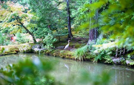 View of crane in a Japanese garden
