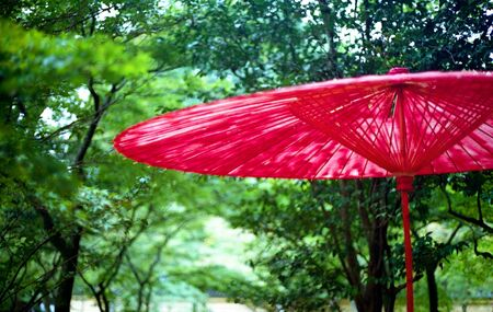 A tattered red parasol in a Japanese garden