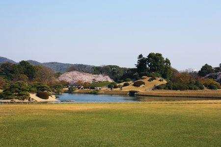 Japanese garden park with cherry blossoms blooming in the spring