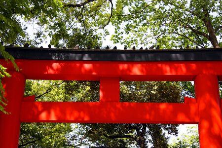 Pigeons sitting on Torii gate at Shrine in Japan