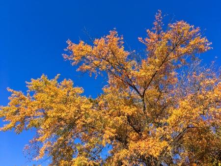 Autumn Tree Under Blue Sky
