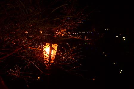 under a tree: Street light at night under a tree