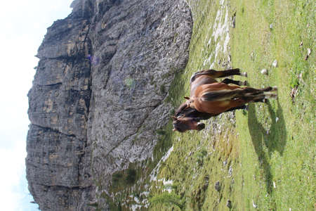Horses on a meadow in the mountains