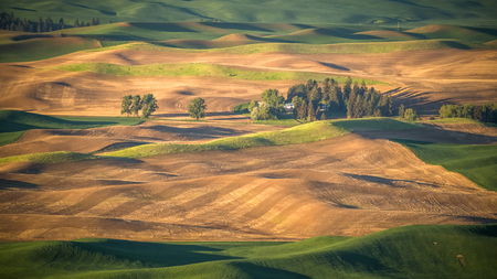 A farm in the Palouse as seen from Steptoe Butte