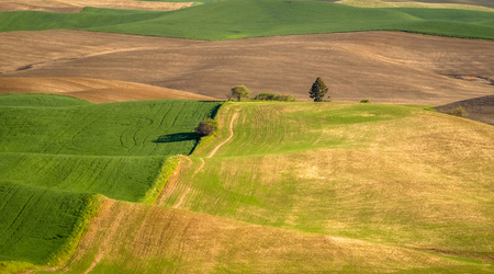 Small trees dot the Palouse landscape 写真素材