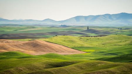 Rolling Hills on the Palouse
