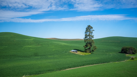 Lone tree and shack in The Palouse: close-up