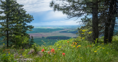 View of The Palouse, from the top of Kamiak Butte 写真素材 - 103041349