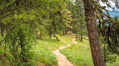 Kamiak Butte: Pine Ridge Trail 写真素材 - 103024706