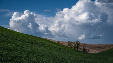 Trees between hills in The Palouse