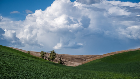 Trees between hills in The Palouse 2