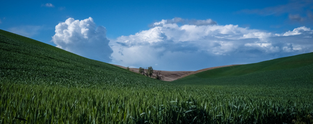 Trees between hills in The Palouse 3 写真素材 - 103024708