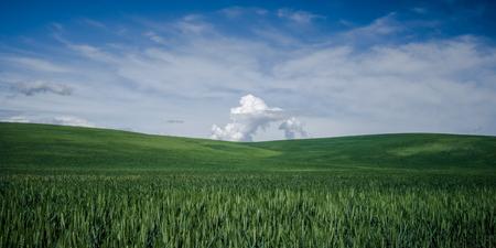 Wheat field in The Palouse