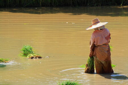 southern of thailand: Southern Thailand  farmer
