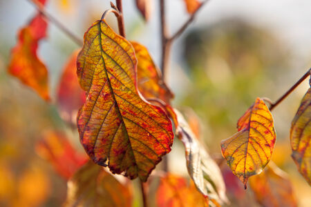 Autumn colors in Sweden