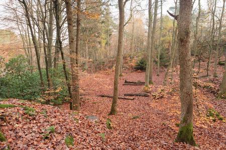 scandinavian peninsula: Forest in Autumn