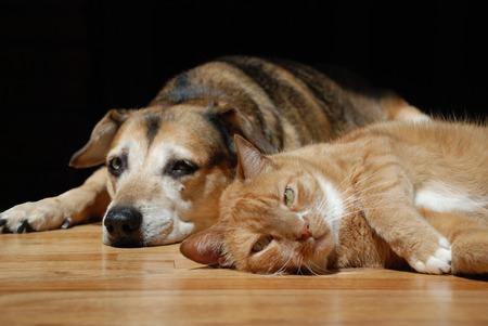 Orange cat lying on wood floor with sleepy dog in background.