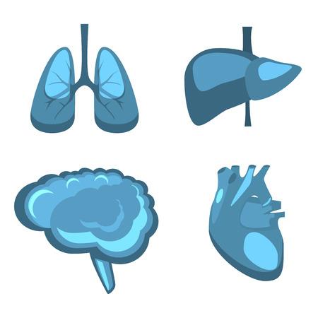 donacion de organos: Human internal organs vector flat liver, brain, lungs, heart medicine anatomy. Healthy life concept illustration