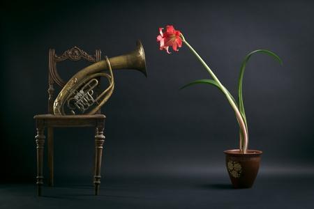trombon: La composici�n de una silla vieja, un tromb�n y una flor roja en una olla.
