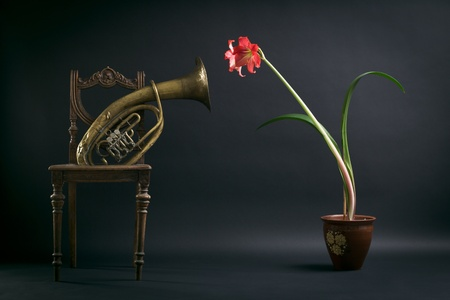 trombone: The composition of an old chair, a trombone and a red flower in a pot.