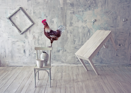 Surreal white interior with red rooster. photo