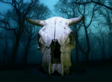 craneo de vaca: Cr�neo de vaca aislado en oscura del paisaje m�stico