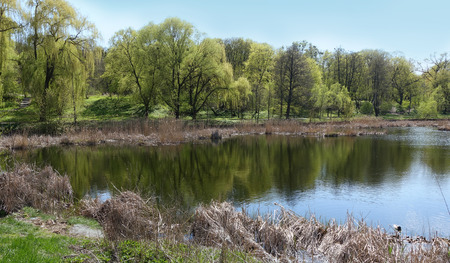 A group of trees on the shore of the lake. Reflection of trees in the lake on a sunny spring day Stock Photo