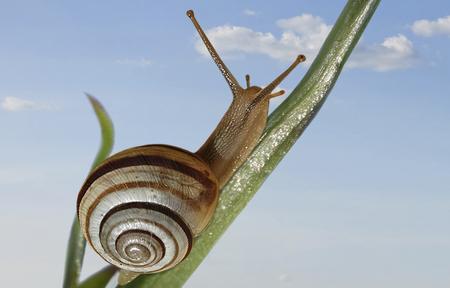 푸른 하늘에 대 한 식물의 스토킹 건너 달팽이 크롤링
