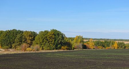 Autumn trees near a plowed field in sunny weather
