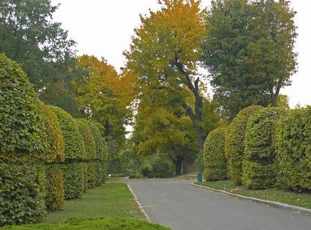 Autumn day in the Kiev Botanical Garden named after Grishko