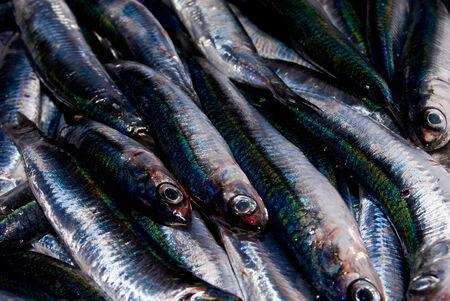 a catch of fresh anchovies Archivio Fotografico