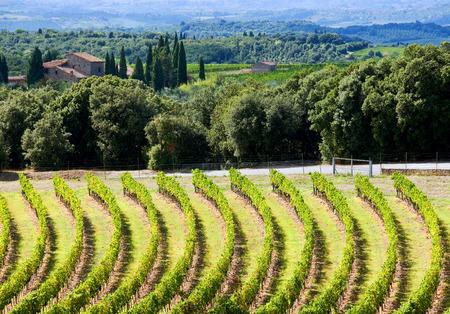 Hills near Siena(Tuscany, Italy) with vineyards.