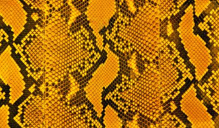 Orange black and yellow stripes of snakeskin