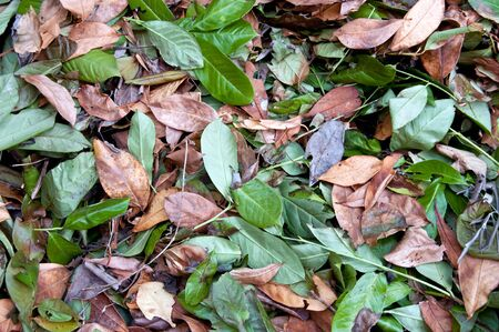 texture of green and brown dried leaves