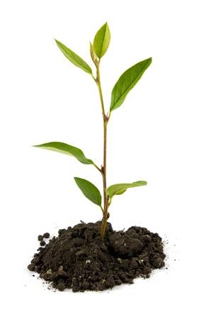 Medium sprout Stock Photo