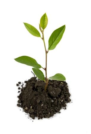 Medium sprout top Stock Photo - 21741403