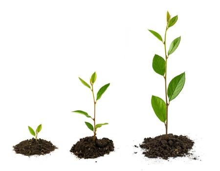 Plant growth Standard-Bild