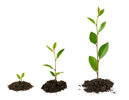 seeding: Plant growth Stock Photo