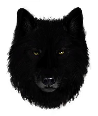 Zwarte wolf Stockfoto
