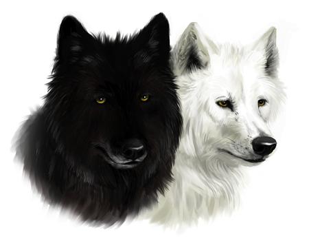 2 つの狼