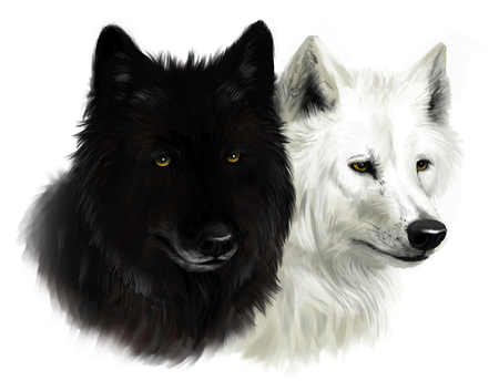 Twee wolven Stockfoto