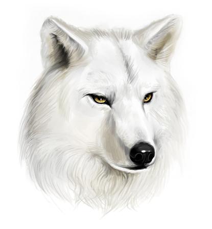 White wolf Zdjęcie Seryjne - 31038202